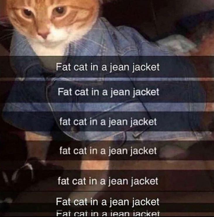 Cat - Fat cat in a jean jacket Fat cat in a jean jacket fat cat in a jean jacket fat cat in a jean jacket fat cat in a jean jacket Fat cat in a jean jacket Fat cat in a jean iaCket.