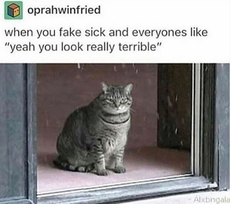 """Cat - oprahwinfried when you fake sick and everyones like """"yeah you look really terrible"""" Alxbngala"""