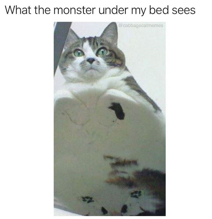 Cat - What the monster under my bed sees @cabbagecatmemes