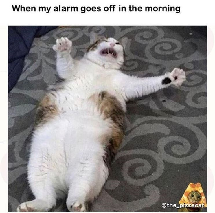 Cat - When my alarm goes off in the morning @the_pizzacata