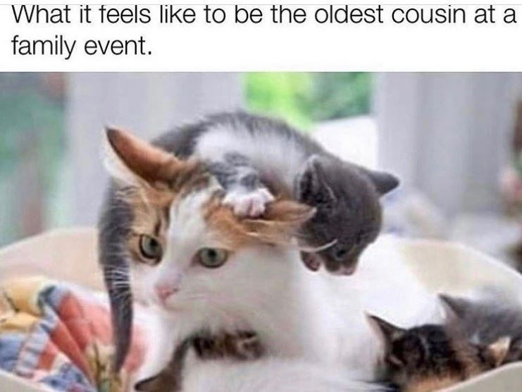 Cat - What it feels like to be the oldest cousin at a family event.