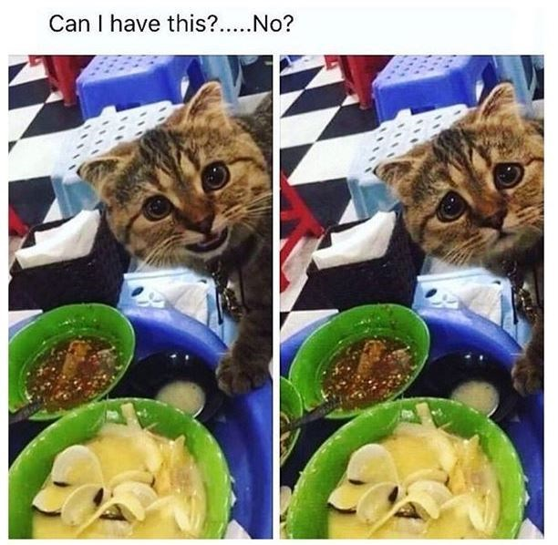 Cat - Can I have this?..No?