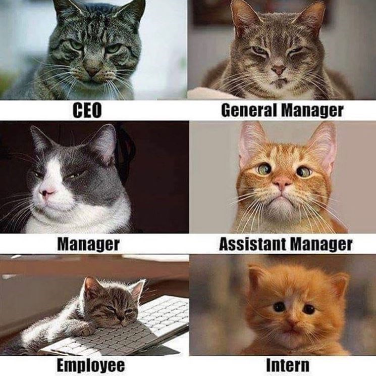 Cat - CEO General Manager Manager Assistant Manager Employee Intern