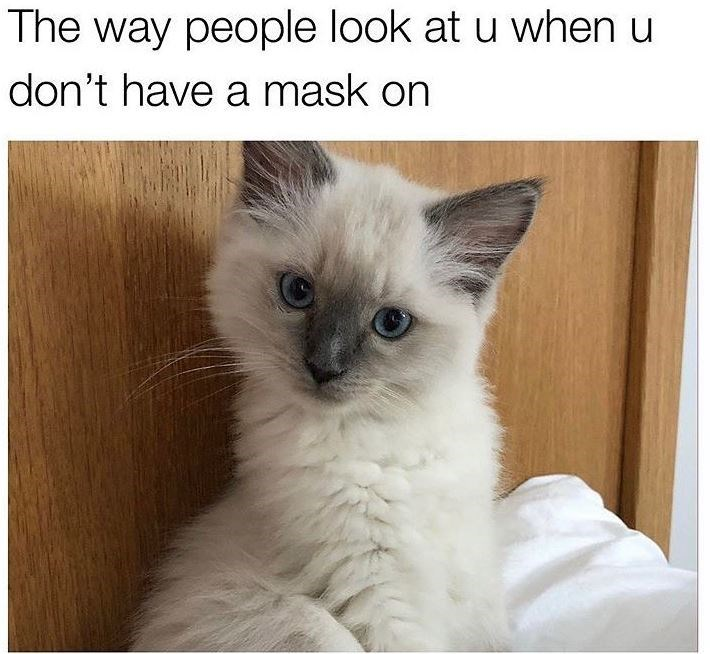 Cat - The way people look at u when u don't have a mask on