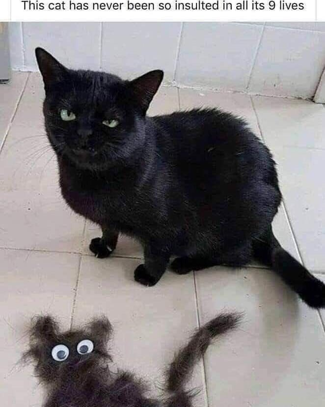 Cat - This cat has never been so insulted in all its 9 lives