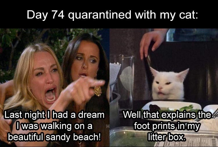woman yelling at cat Day 74 quarantined with my cat: Last night I had a dream I was walking on a beautiful sandy beach! Well that explains the foot prints in my litter box.