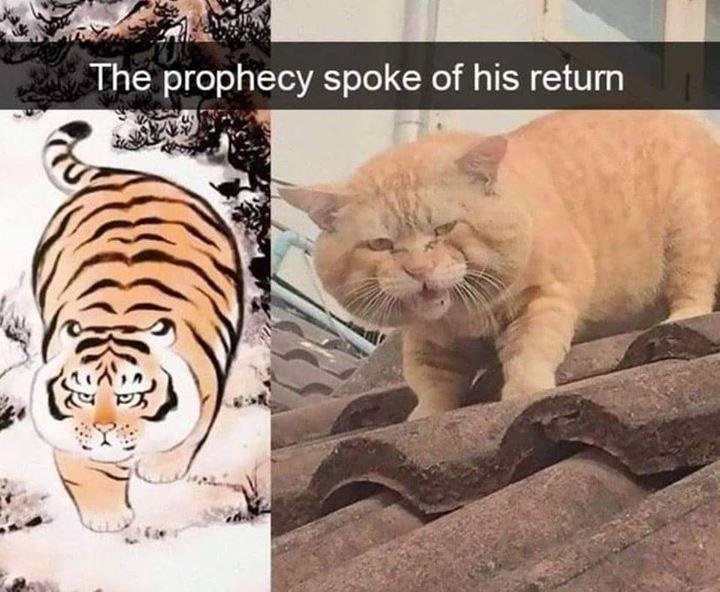 The prophecy spoke of his return traditional japanese tiger art vs chonky ginger cat