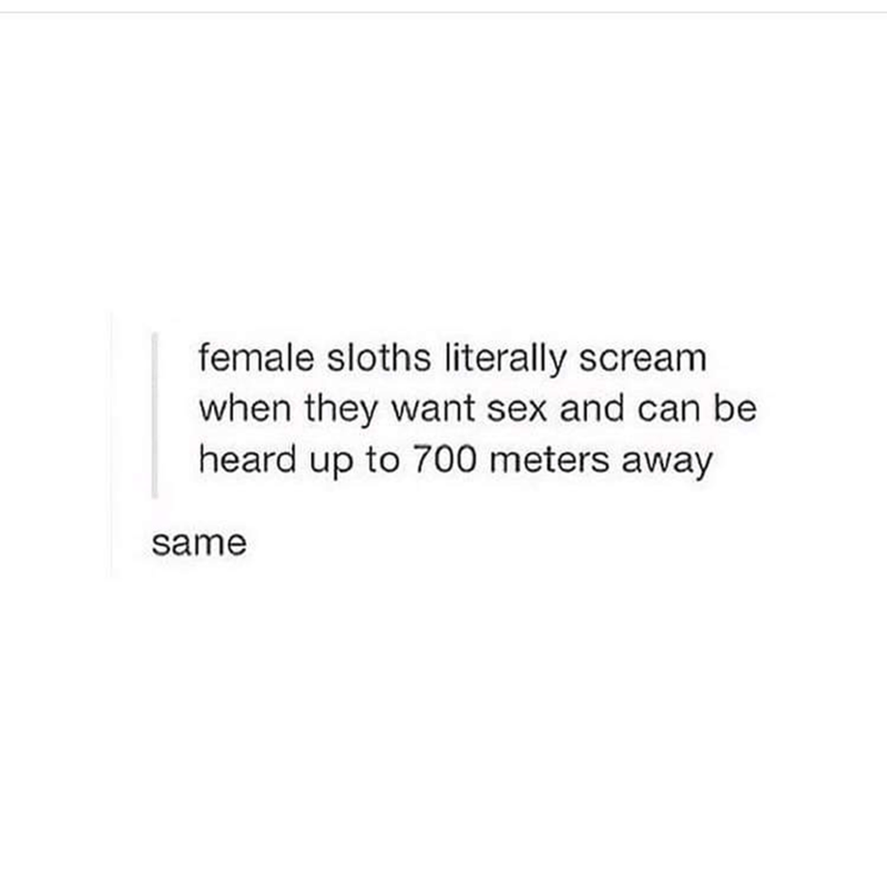 Text - female sloths literally scream when they want sex and can be heard up to 700 meters away same