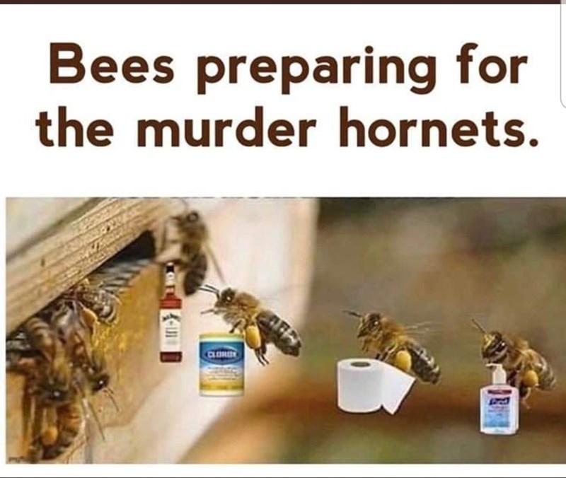Honeybee - Bees preparing for the murder hornets. CLOR