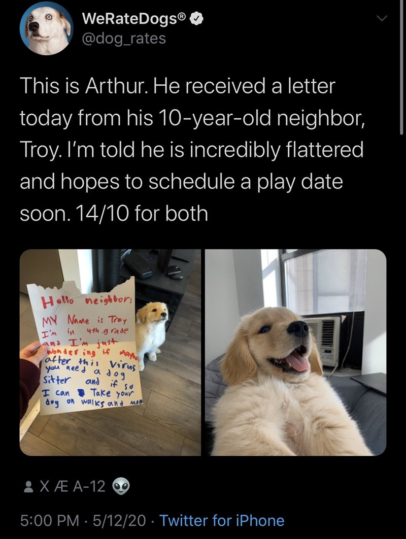Canidae - WeRateDogs® O @dog_rates This is Arthur. He receiveda letter today from his 10-year-old neighbor, Troy. I'm told he is incredibly flattered and hopes to schedule a play date soon. 14/10 for both Hello neighbors MY Name is Troy I'm in and I'm just Wonder ing i4 day after this virus you nee d Sitter I can Take your dog on walks and moe 4th g rade a dog and if so 8XÆ A-12 0 5:00 PM · 5/12/20 · Twitter for iPhone