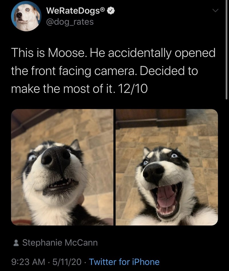Photo caption - WeRateDogs® O @dog_rates This is Moose. He accidentally opened the front facing camera. Decided to make the most of it. 12/10 : Stephanie McCann 9:23 AM · 5/11/20 · Twitter for iPhone