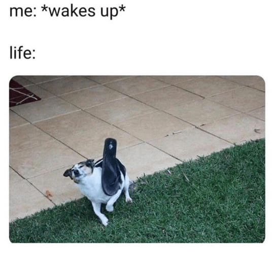 Canidae - me: *wakes up* life: