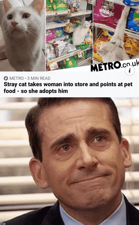 Internet meme - whiskas 1.5 METRO.co.uk METRO • 3 MIN READ Stray cat takes woman into store and points at pet food - so she adopts him