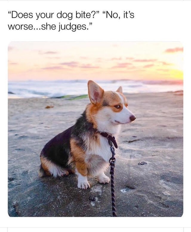 "Dog - ""Does your dog bite?"" ""No, it's worse...she judges."""