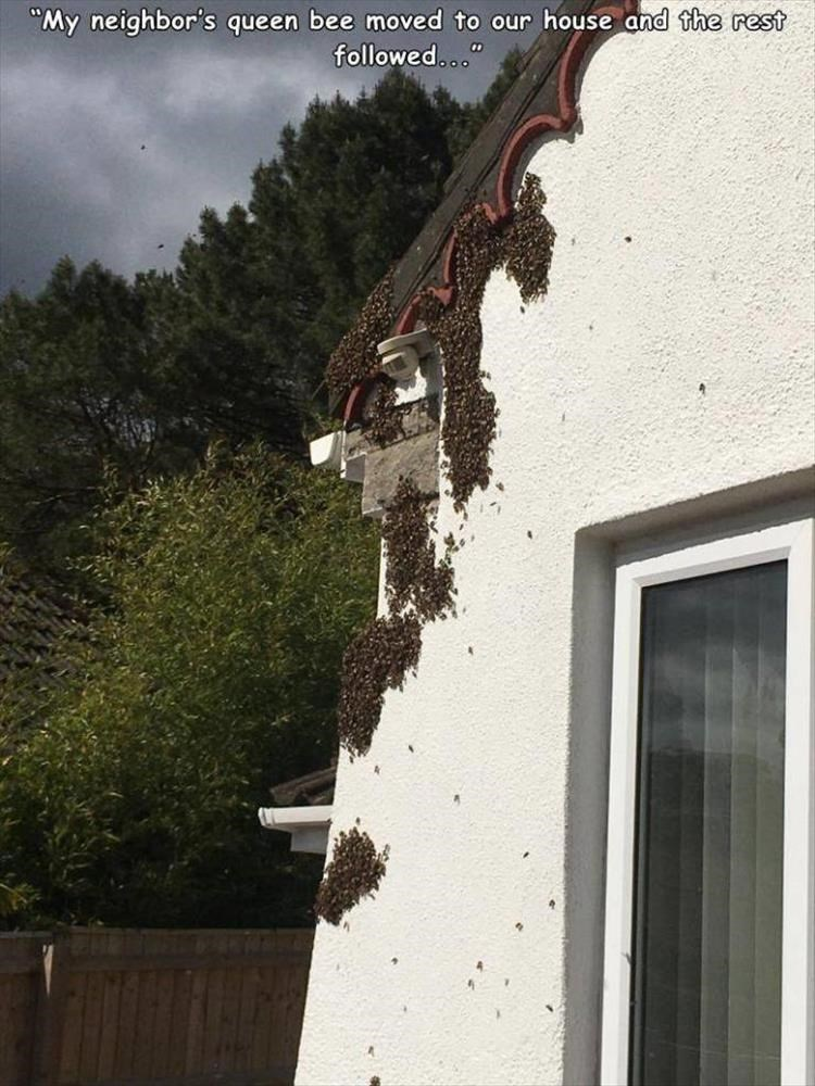 """Wall - """"My neighbor's queen bee moved to our house and the rest followed..."""""""
