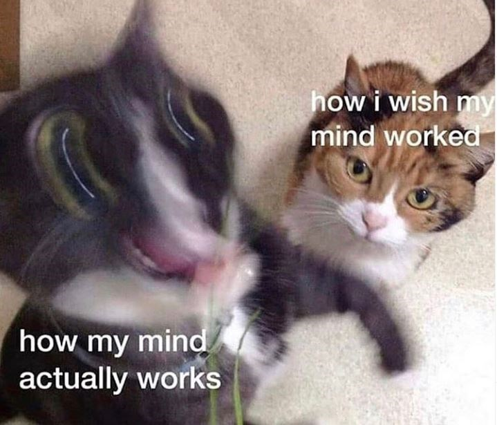 Cat - how i wish my mind worked how my mind actually works