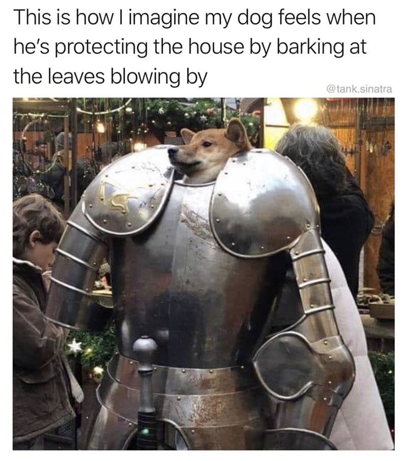 Armour - This is how I imagine my dog feels when he's protecting the house by barking at the leaves blowing by @tank.sinatra