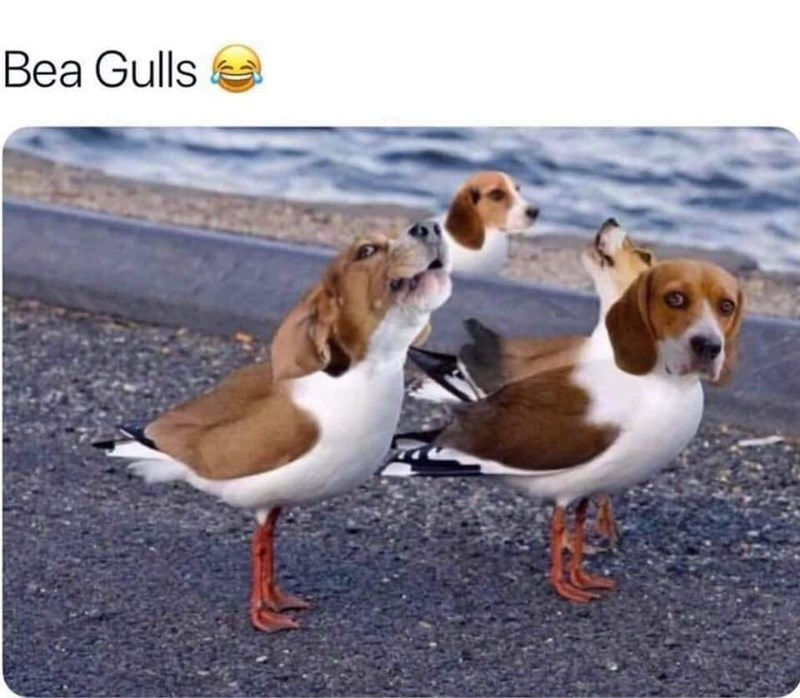 Vertebrate - Bea Gulls