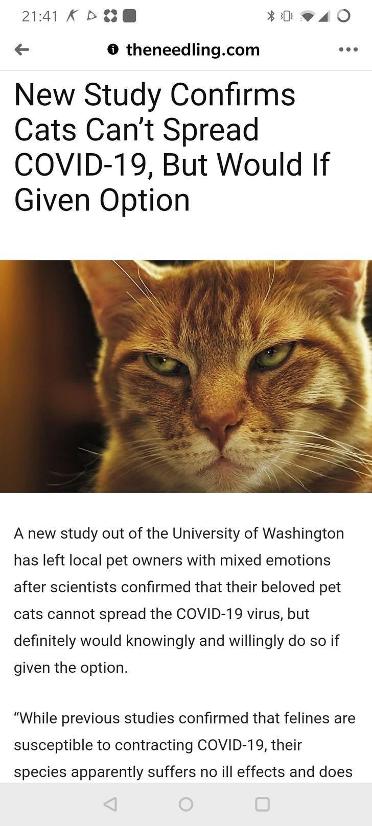New Study Confirms Cats Can't Spread COVID-19, But Would If Given Option A new study out of the University of Washington has left local pet owners with mixed emotions after scientists confirmed that their beloved pet cats cannot spread the COVID-19 virus, but definitely would knowingly and willingly do so if given the option.