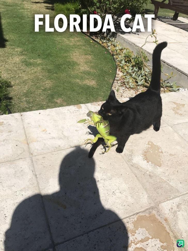 Cat - FLORIDA CAT