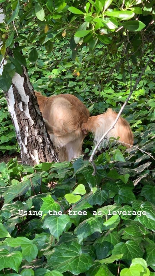 Wildlife - Using the tree as leverage