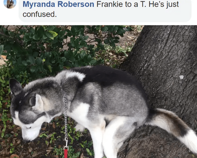 Mammal - Myranda Roberson Frankie to a T. He's just confused.