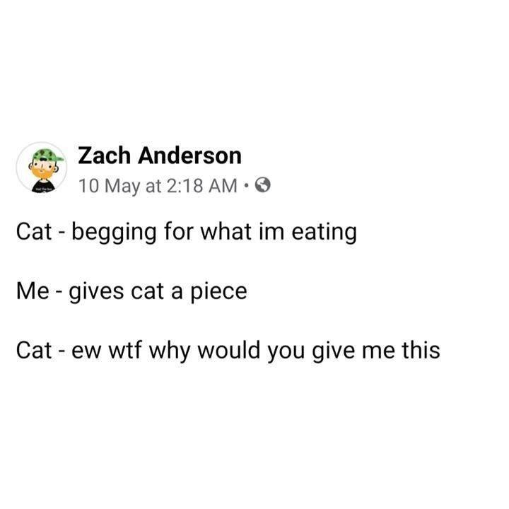 cat memes - 9486209536