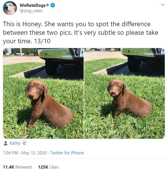 Vertebrate - WeRateDogs® @dog_rates This is Honey. She wants you to spot the difference between these two pics. It's very subtle so please take your time. 13/10 Käthy 7:04 PM - May 12, 2020 - Twitter for iPhone 11.4K Retweets 125K Likes
