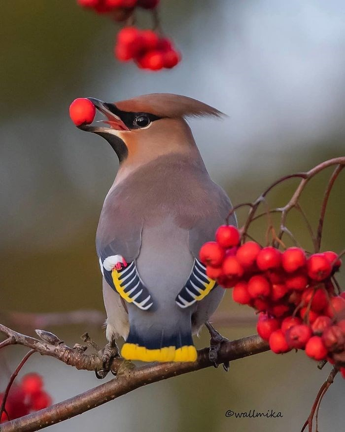 Bird - ©wallmika