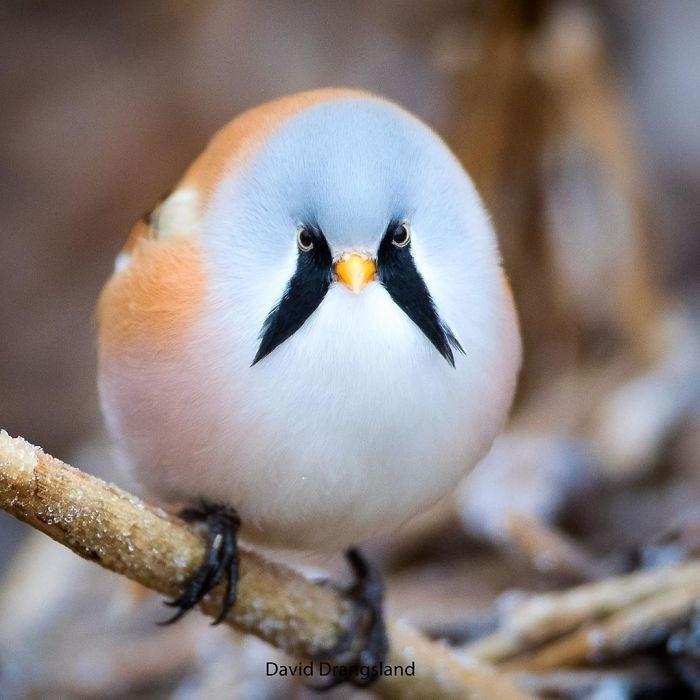 Bird - David Drangsland