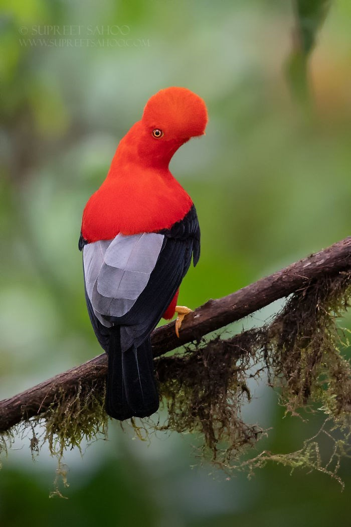 Bird - SUPREET SAHOO www.SUPREEISAHOOCOM