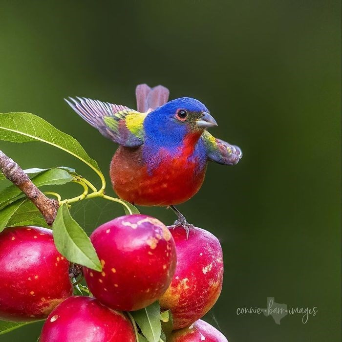 Bird - Conhie