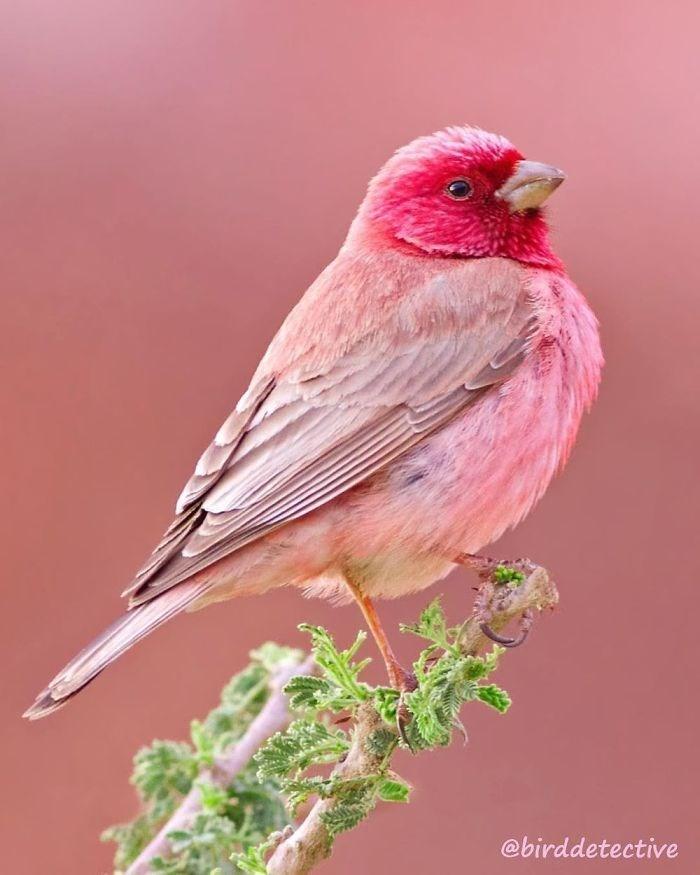 Bird - @birddetective