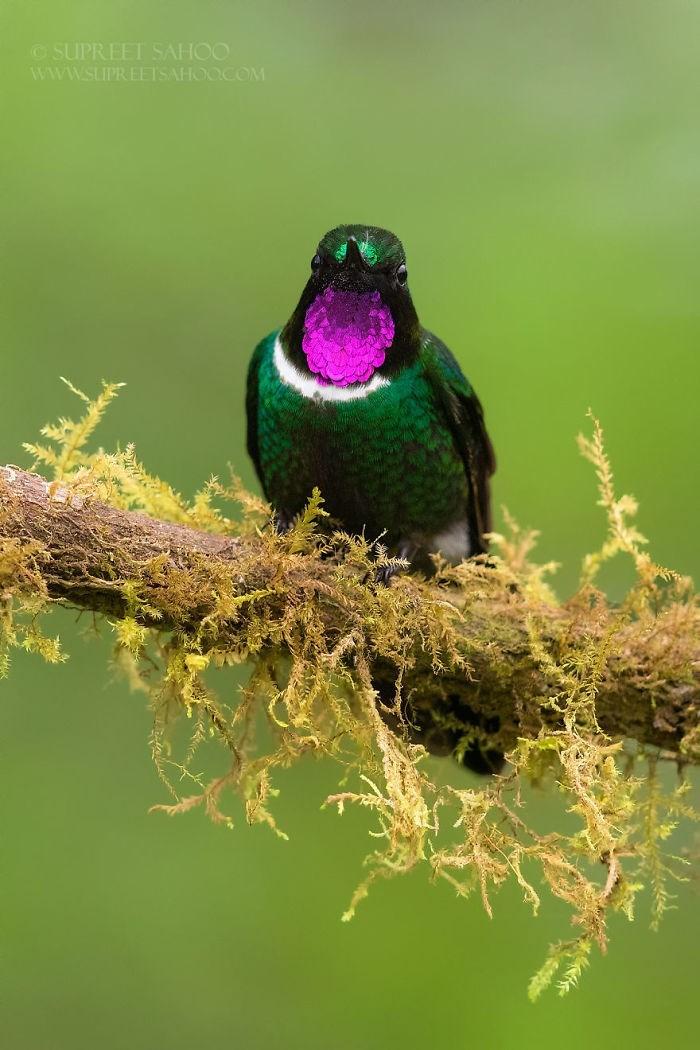 Bird - SUPREET SAHOO wwW.SLIPREETSAHOOCOM