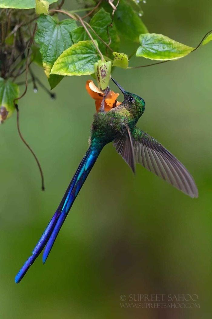 Bird - ©SUPREET SAHOO WwW.SUPREETSAHOO.COM