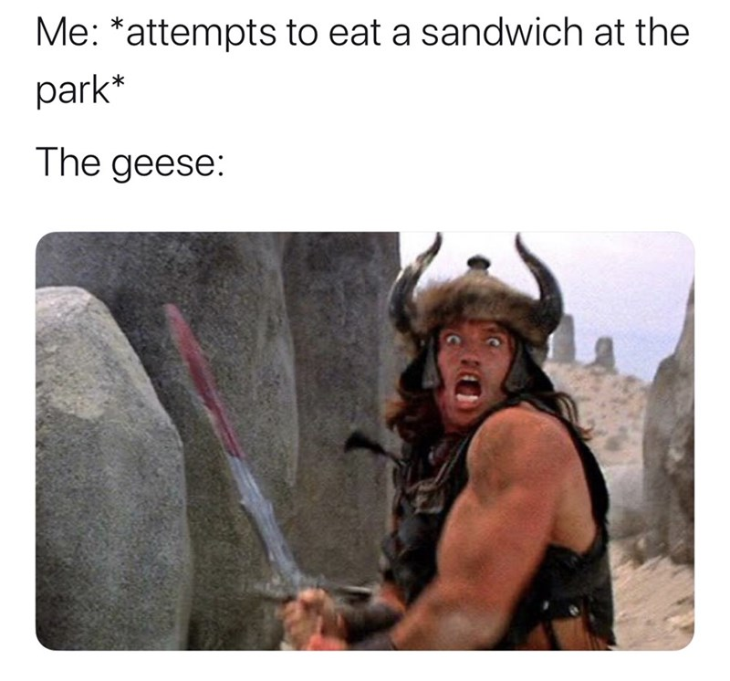 Human - Me: *attempts to eat a sandwich at the park* The geese: