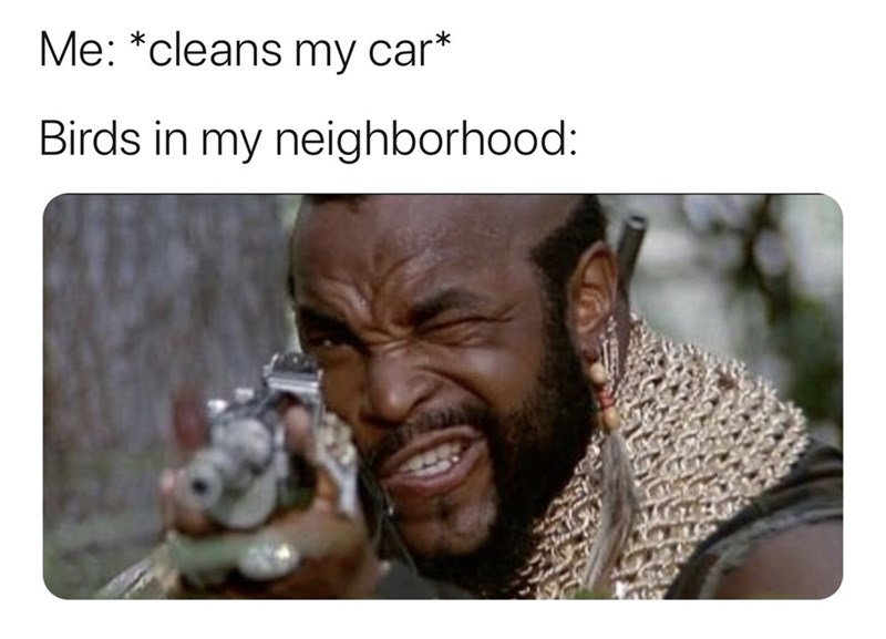 Facial expression - Me: *cleans my car* Birds in my neighborhood: