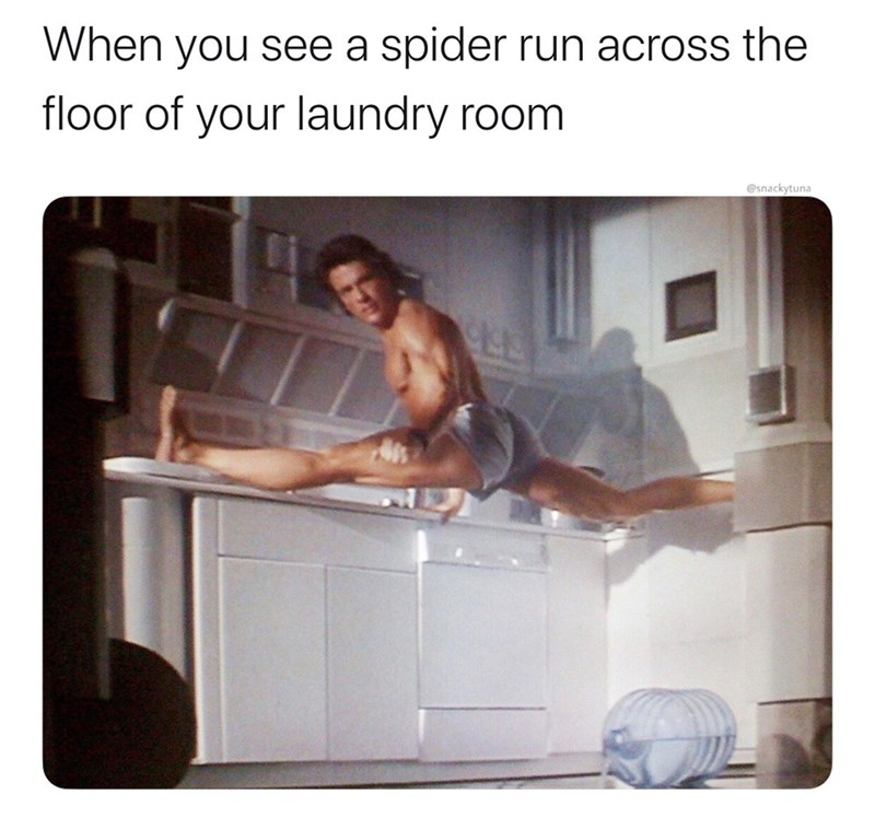 Product - When you see a spider run across the floor of your laundry room @snackytuna