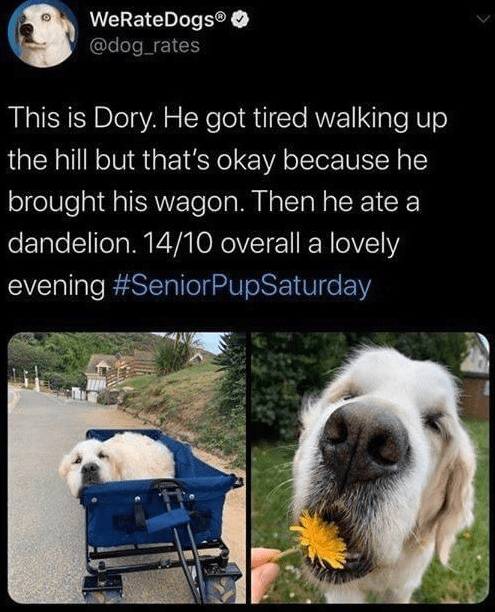 Snout - WeRateDogs® @dog_rates This is Dory. He got tired walking up the hill but that's okay because he brought his wagon. Then he ate a dandelion. 14/10 overall a lovely evening #SeniorPupSaturday