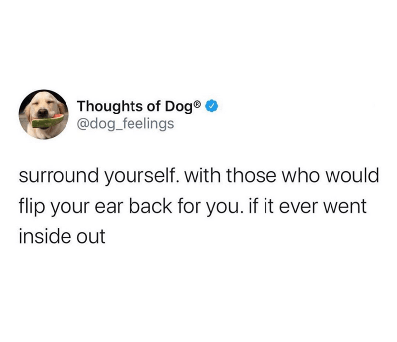 Text - Thoughts of Dog® O @dog_feelings surround yourself. with those who would flip your ear back for you. if it ever went inside out
