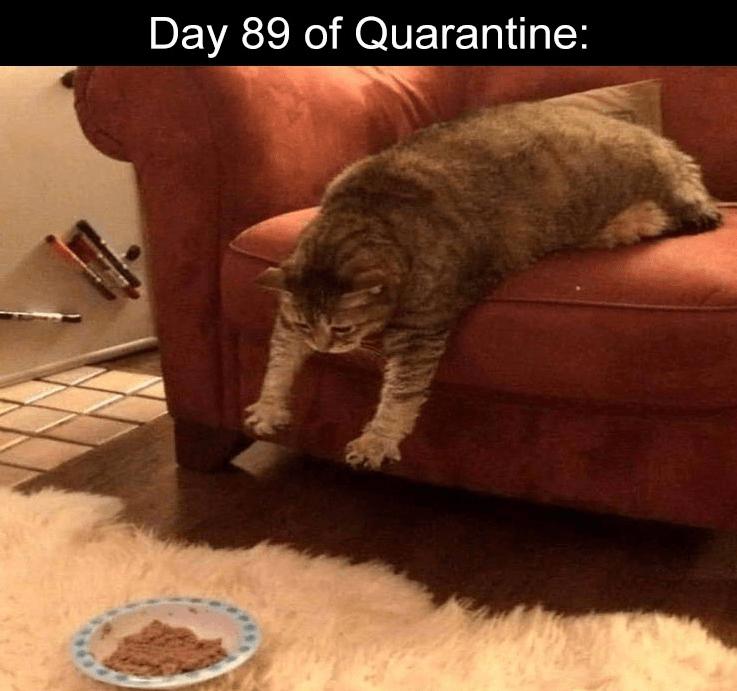 Cat - Day 89 of Quarantine: