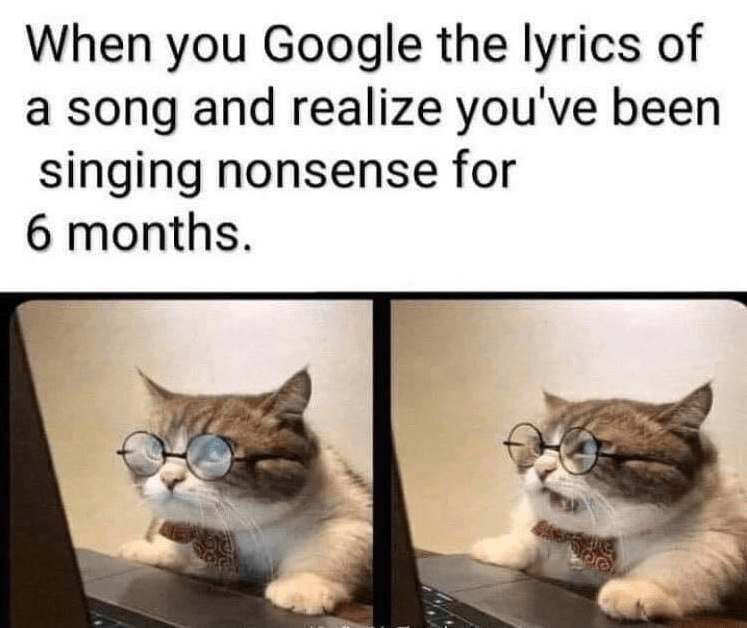 Cat - When you Google the lyrics of a song and realize you've been singing nonsense for 6 months.