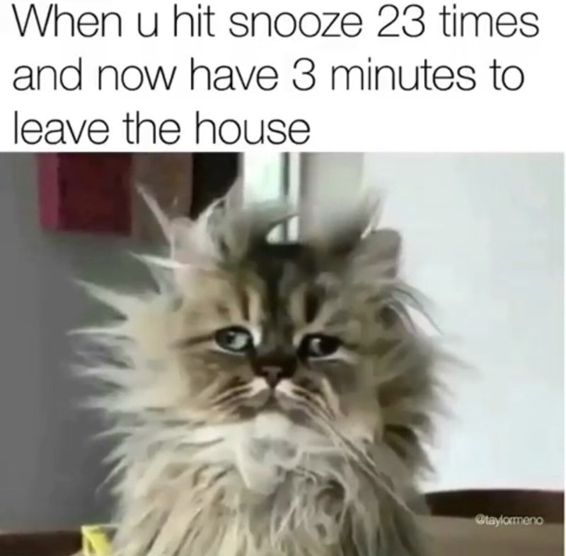 Cat - When u hit snooze 23 times and now have 3 minutes to leave the house Btaylormeno