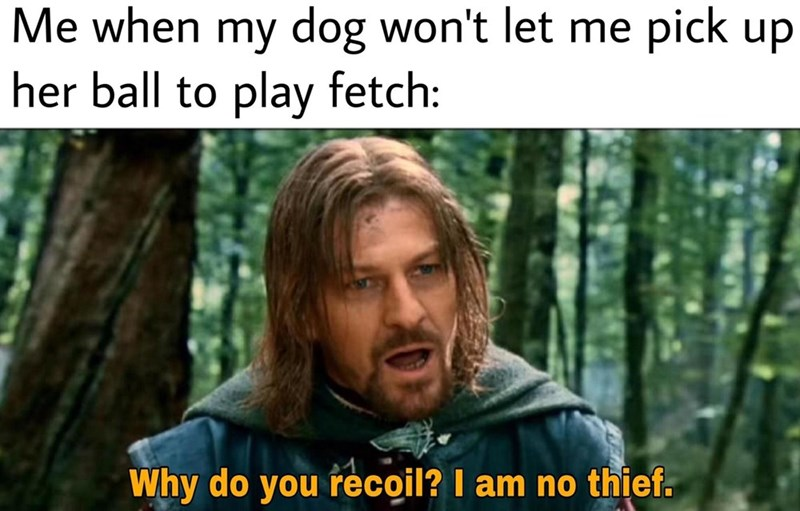 Photo caption - Me when my dog won't let me pick up her ball to play fetch: Why do you recoil? I am no thief.