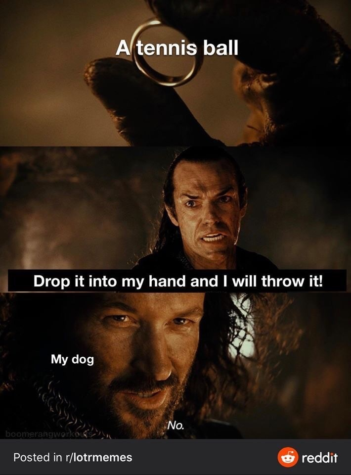 Movie - Atennis ball Drop it into my hand and I will throw it! My dog No. boomerangworkou Posted in r/lotrmemes Oreddit