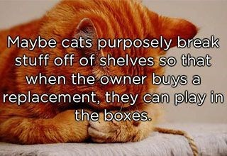 Maybe cats purposely break stuff off of shelves so that when the owner buys a replacement they can play in the boxes