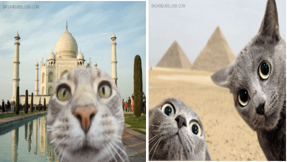 traveling cats taking selfies