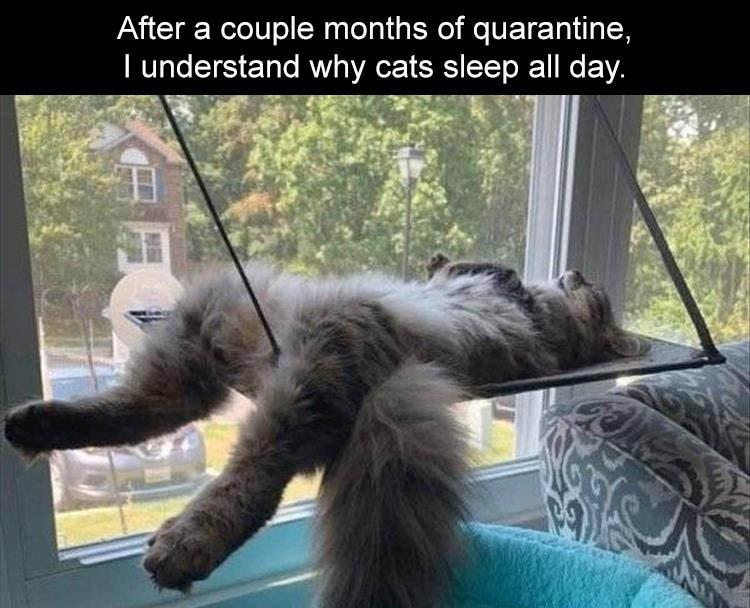 Cat - After a couple months of quarantine, I understand why cats sleep all day.