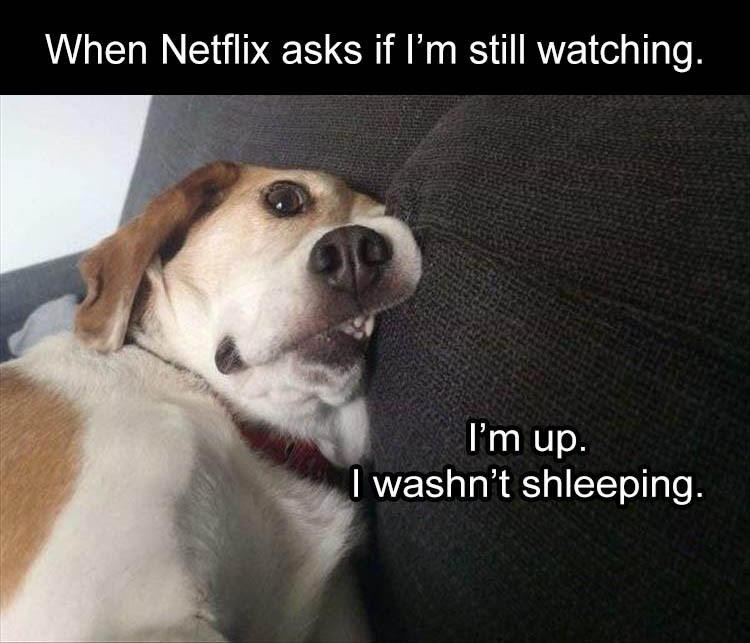Dog breed - When Netflix asks if I'm still watching. I'm up. I washn't shleeping.