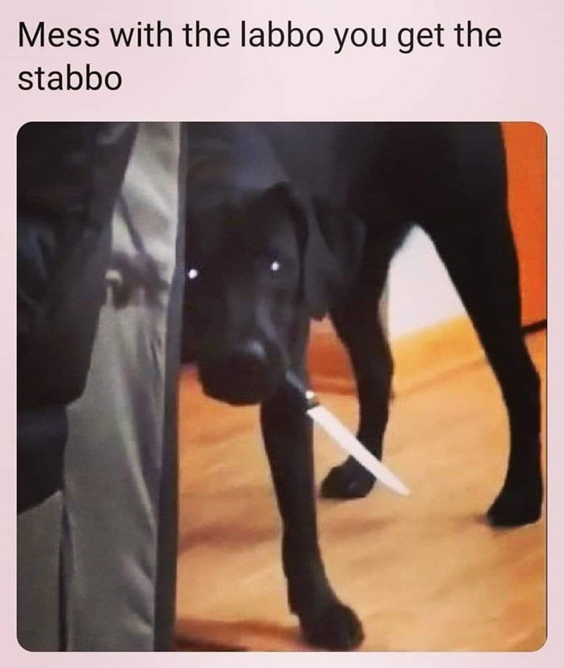 Dog - Mess with the labbo you get the stabbo